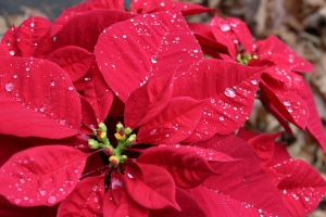 12-11-14 raindrops on red