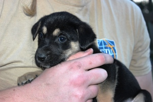 1-29-15 puppy closeup