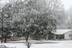 2-25-15 snow 1