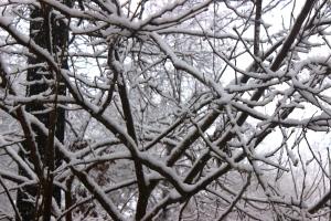 2-25-15 snow 2