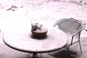 2-25-15 snow 3