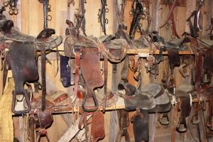 3-21-15 saddles