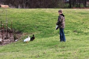3-7-15 Jasper and ducks