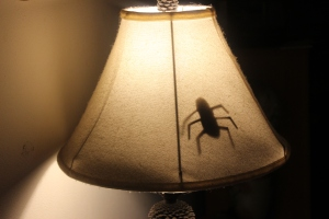 5-26-15 bug prank