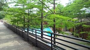 4-24-16 water garden cypress trees