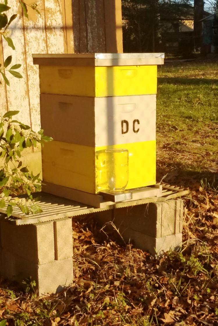 2-26-17-hive