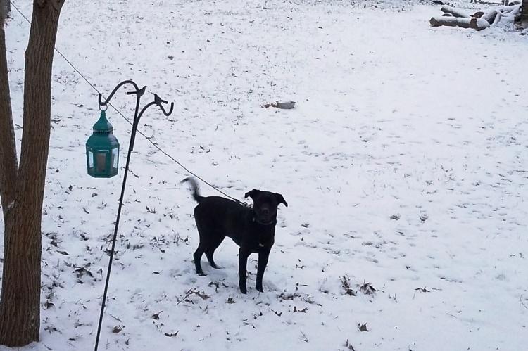1-16-18 Jack in snow