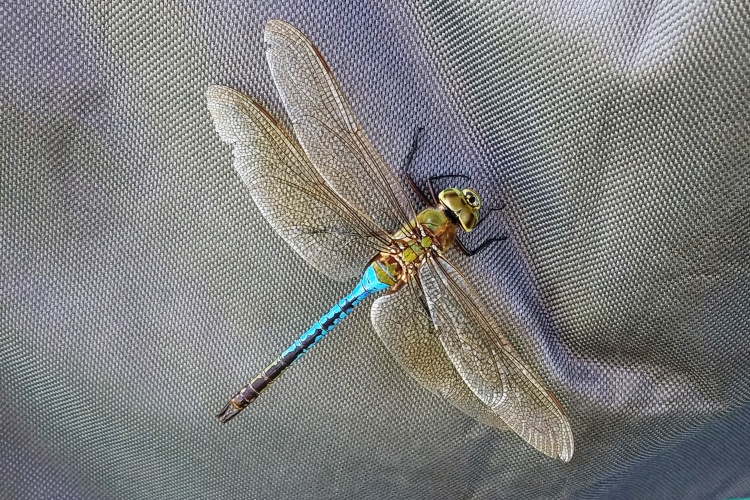 10-4-18 dragonfly